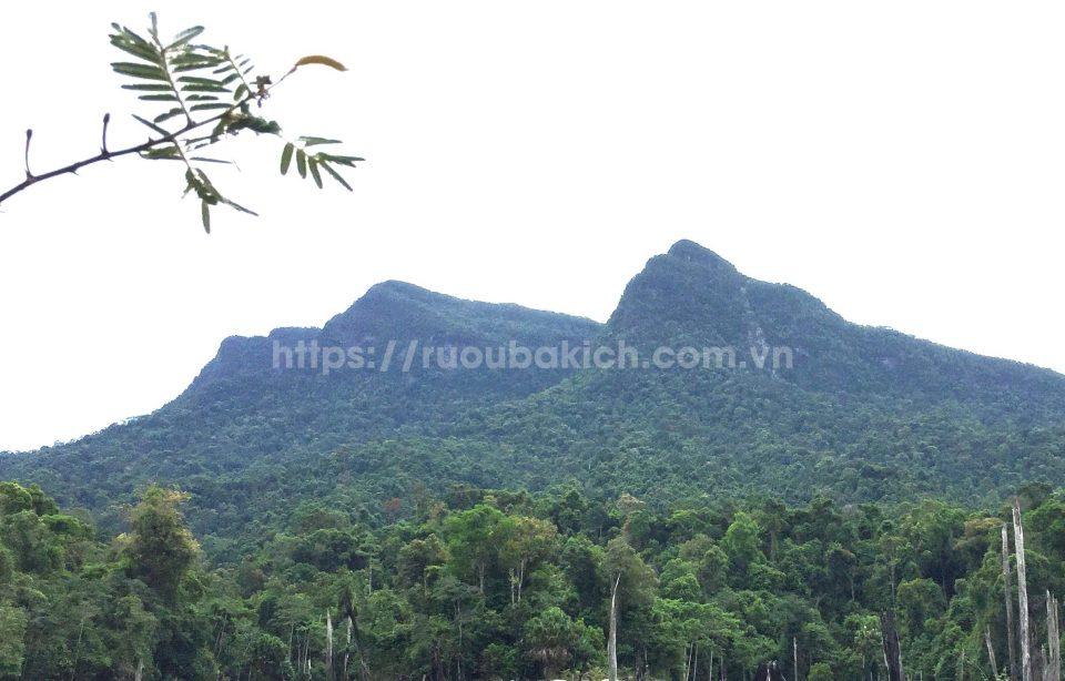 Khu vực rừng phòng hộ Đắk Mi